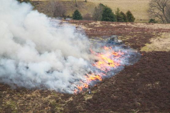 Muir burn